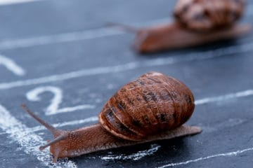 snails-crossing-finish-slow-legislation